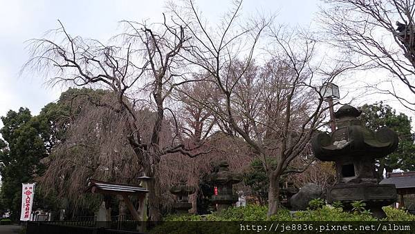0323上野公園44.jpg