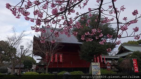 0323上野公園47.jpg
