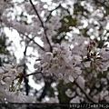 0323上野公園49.jpg