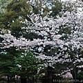 0323上野公園51.jpg