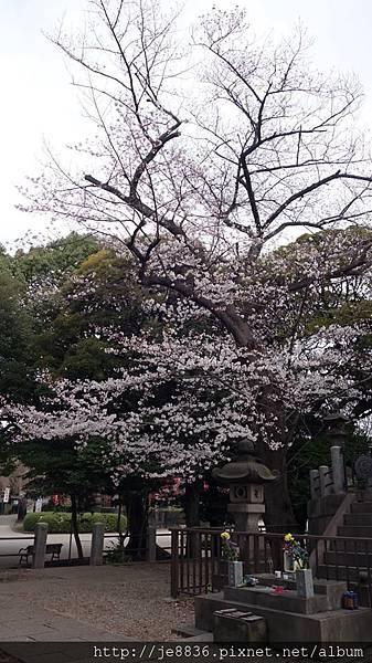 0323上野公園50.jpg