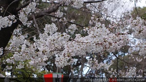 0323上野公園56.jpg
