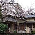 0323上野公園58.jpg