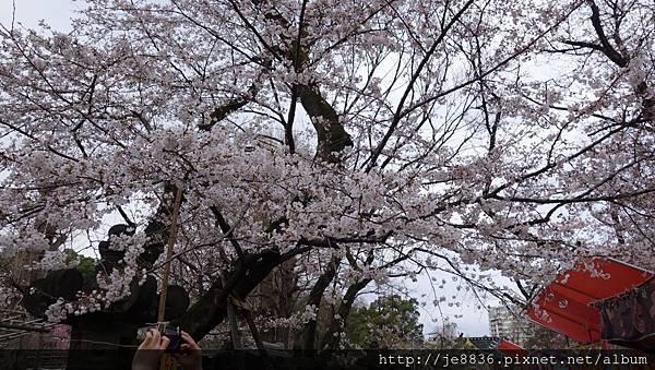 0323上野公園64.jpg