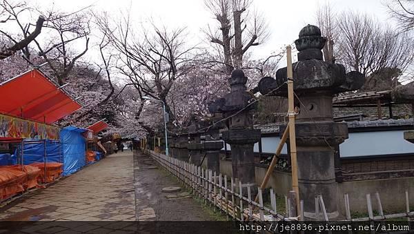 0323上野公園66.jpg
