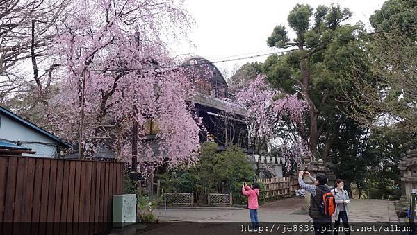 0323上野公園69.jpg