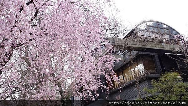0323上野公園70.jpg