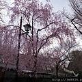 0323上野公園72.jpg