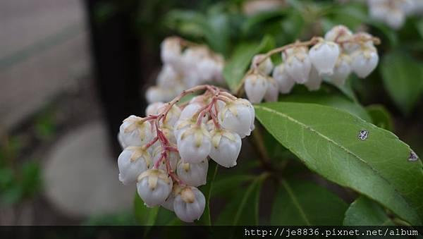 0323上野公園74.jpg