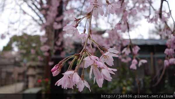0323上野公園75.jpg