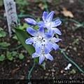0323上野公園76.jpg