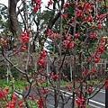 0323上野公園79.jpg