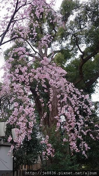 0323上野公園81.jpg