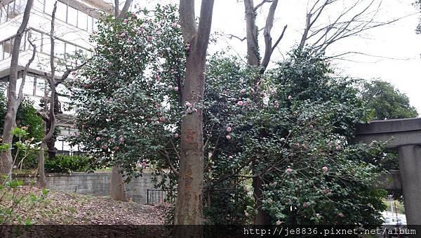 0323上野公園82.jpg