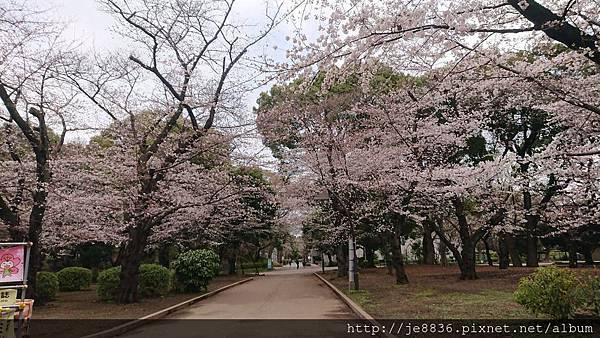 0323上野公園96.jpg