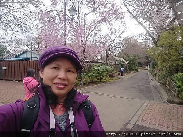 0323上野公園99.jpg