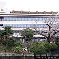 0323上野公園~不忍池1.jpg