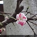 0323上野公園~不忍池5.jpg