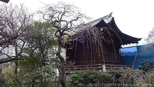 0323上野公園~不忍池6.jpg