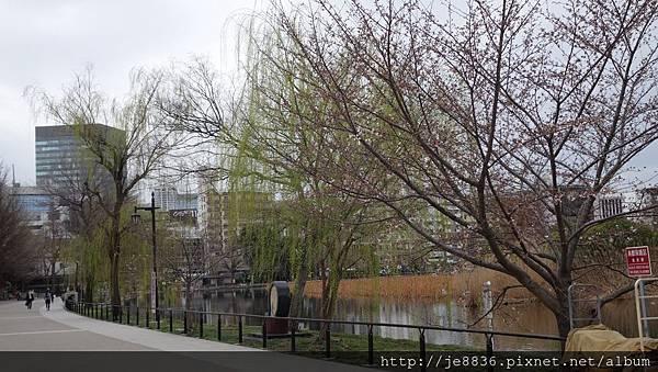 0323上野公園~不忍池14.jpg