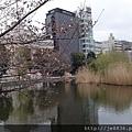 0323上野公園~不忍池16.jpg