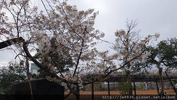 0323上野公園~不忍池21.jpg