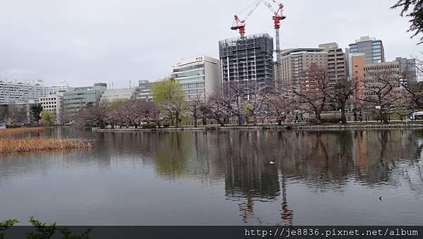 0323上野公園~不忍池23.jpg