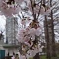 0323上野公園~不忍池27.jpg