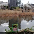 0323上野公園~不忍池26.jpg