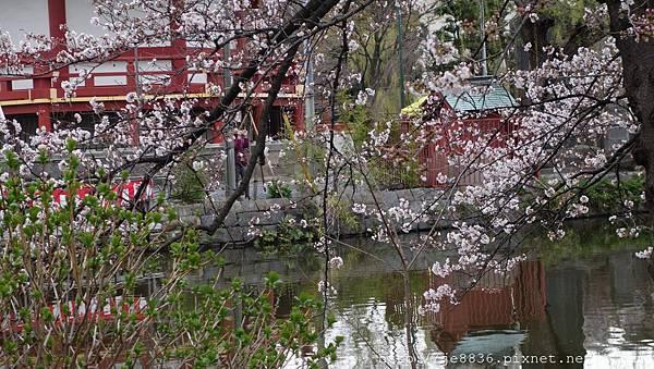 0323上野公園~不忍池31.jpg