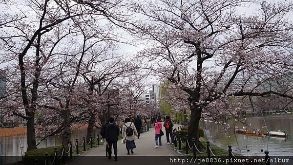 0323上野公園~不忍池32.jpg