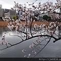 0323上野公園~不忍池36.jpg