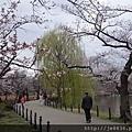 0323上野公園~不忍池37.jpg