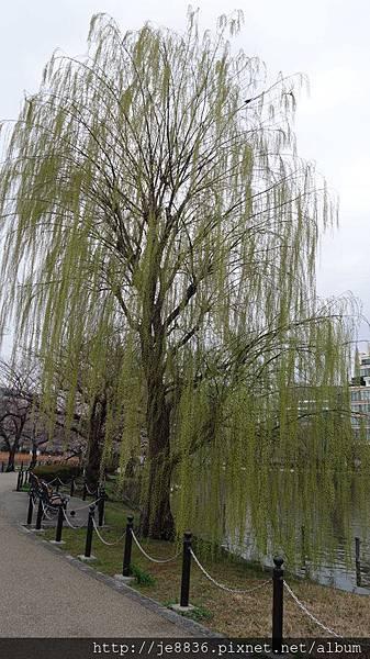 0323上野公園~不忍池40.jpg