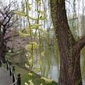 0323上野公園~不忍池43.jpg