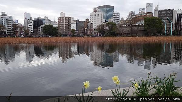 0323上野公園~不忍池44.jpg