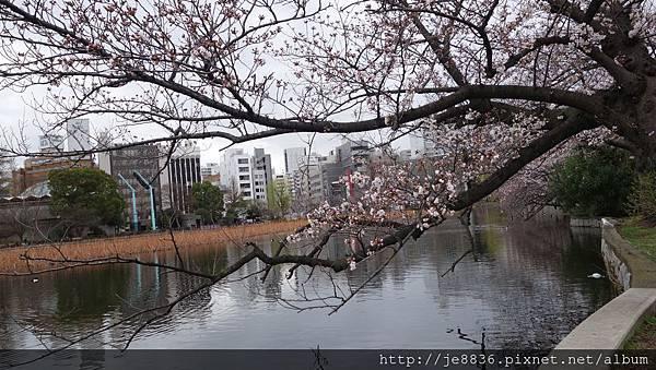 0323上野公園~不忍池45.jpg