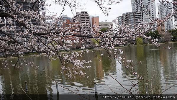 0323上野公園~不忍池46.jpg