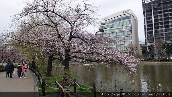 0323上野公園~不忍池47.jpg
