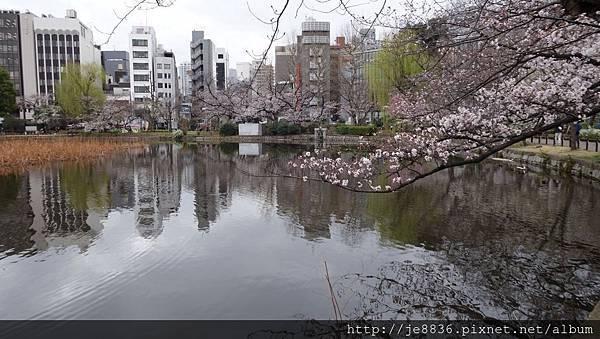 0323上野公園~不忍池48.jpg