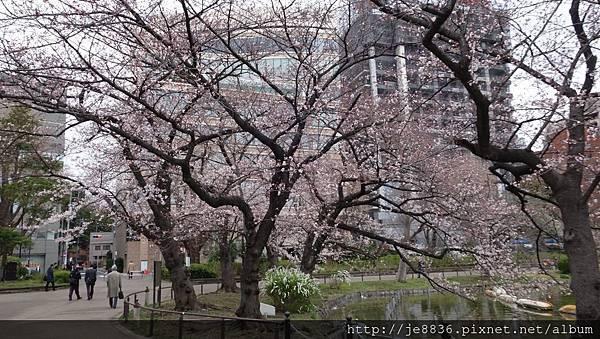 0323上野公園~不忍池49.jpg