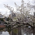 0323上野公園~不忍池50.jpg
