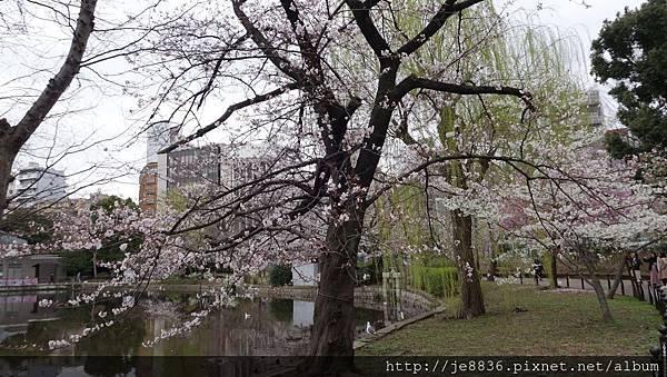 0323上野公園~不忍池51.jpg