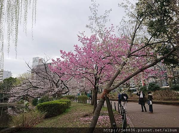 0323上野公園~不忍池53.jpg