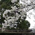 0323上野公園~不忍池57.jpg