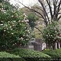 0323上野公園~不忍池60.jpg