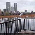 0323上野公園~不忍池62.jpg