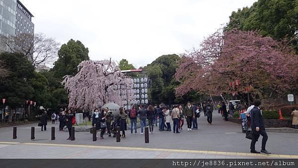 0323上野公園~不忍池63.jpg