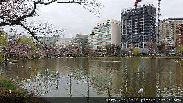 0323上野公園~不忍池66.jpg