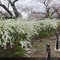 0323上野公園~不忍池68.jpg